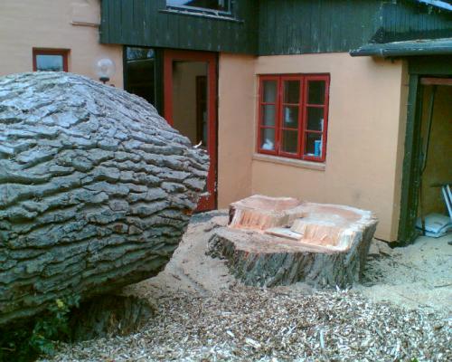 Fældningen af træet er gået godt, dselvom der ikke er meget plads.
