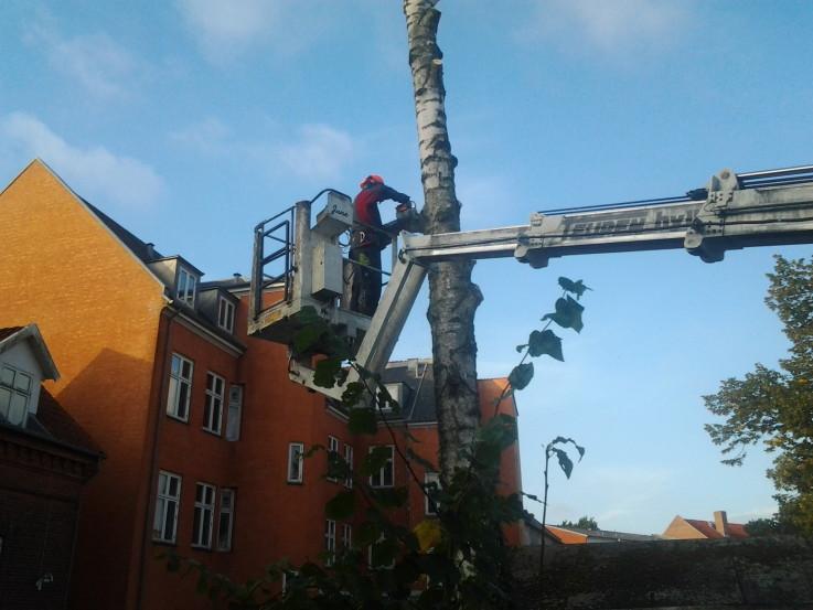 Træfældning fra lift i Slagelse / Vestsjælland