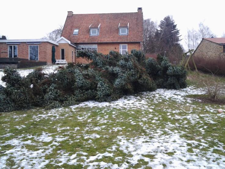 Træet er fældet