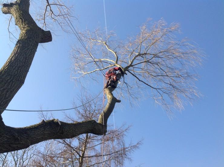 Kravler op og Skærer grenene