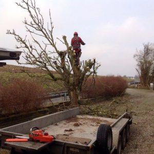 Beskæring af træer på sjælland
