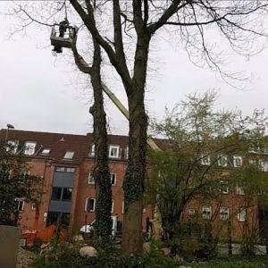 Træfældning & beskæring af træer