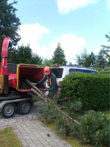 Efter træet er fældet, bliver grenene lavet til flis