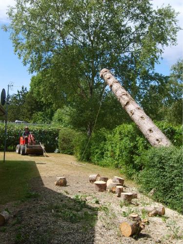 Træfældning; træet hælder forkert, og bliver trukket ned