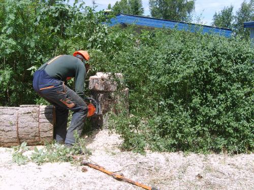 Efter træet er fældet begynder oprydningen.